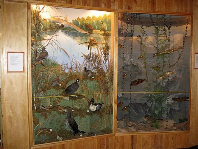 третий зал природа, витрины,птицы